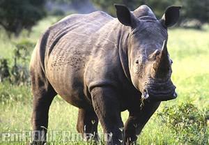 Extinction: Three Plants or Animals an Hour Photo