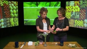 Zipstrip Herb Stripper – FRANCE – Food Exposed: International Food & Tools Series Photo